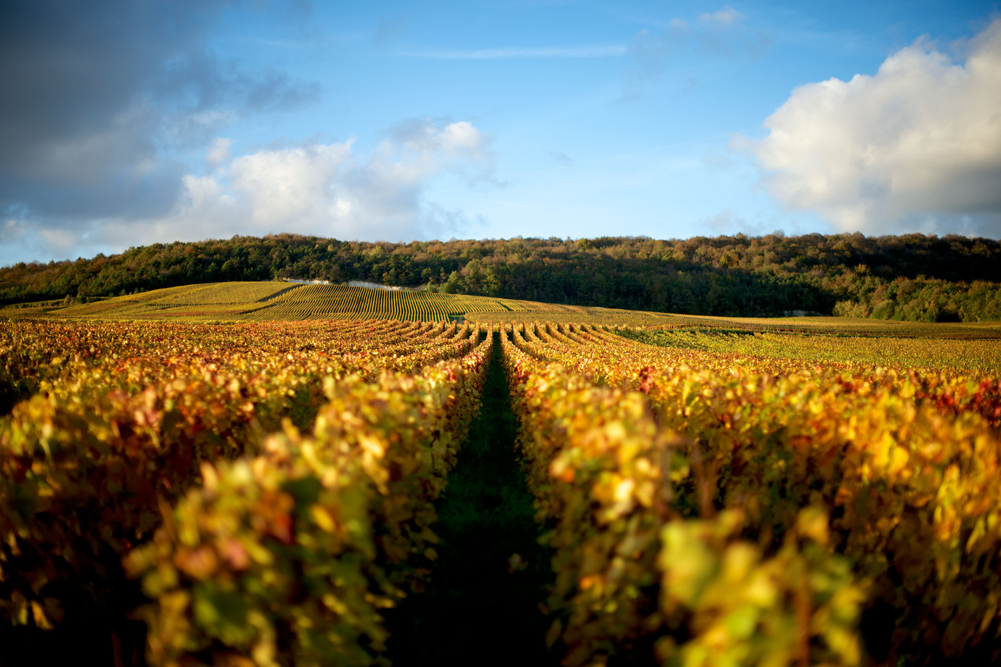 Champagne Rodez Ambonnay